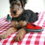Puppy Puck met rode en groene wollen Tuflaa slof
